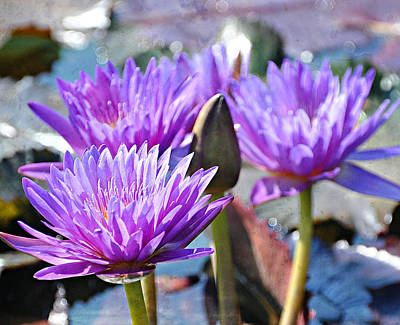 Water Flower 1006 Art Print