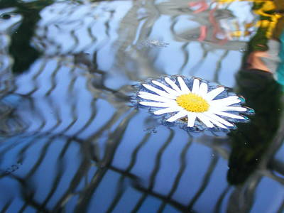 Photograph - Water Flower by Michelle Hoffmann