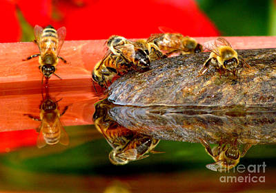 Water For Honey Bees 2 Art Print