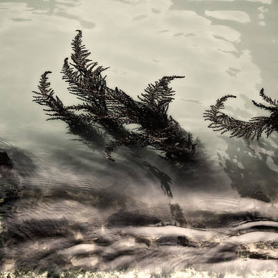 Water Fronds Art Print by Dave Bowman