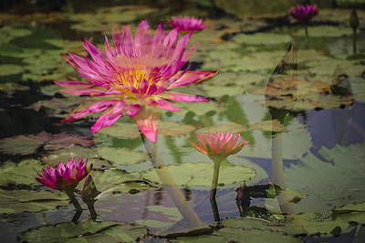 Photograph - Water Garden Dream by Penny Lisowski
