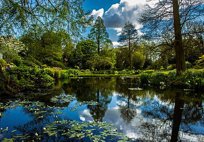 Water Garden Art Print by Martin Newman