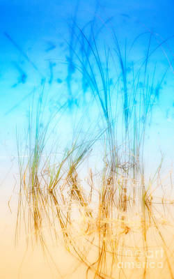 Abstract Seascape Digital Art - Water Grass - Outer Banks by Dan Carmichael
