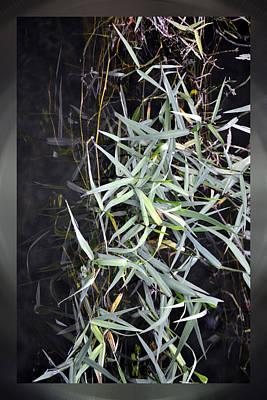 Photograph - Water Grass by rd Erickson