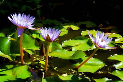 Photograph - Water Lilies 1 by Dawn Eshelman