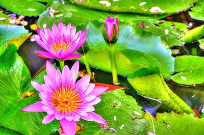 Photograph - Water Lilies 2 by Richard Zentner