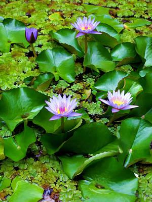 Photograph - Water Lilies 23 by Dawn Eshelman