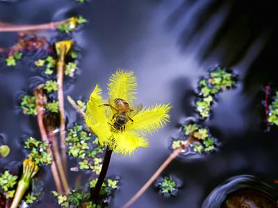 Photograph - Water Lilies 29 by Dawn Eshelman