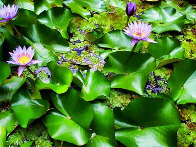 Photograph - Water Lilies 31 by Dawn Eshelman