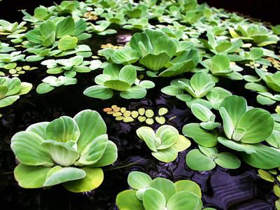 Photograph - Water Lilies 8 by Dawn Eshelman