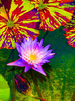 Painting - Water Lilies by Amy Vangsgard