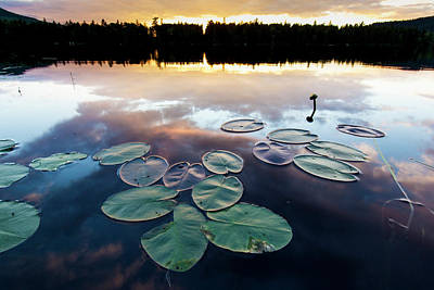 Maine Shore Photograph - Water Lilies And Cloud Reflections by Jerry and Marcy Monkman