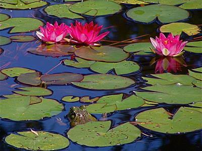Photograph - Peek-a-boo Frog by Rita Mueller