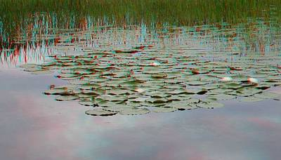 Photograph - Water Lilies At Green Cay by Ron Davidson
