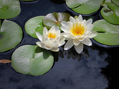 Irish Leprechauns - Water Lilies by Bob McGill
