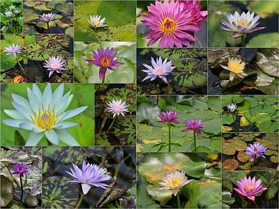 Photograph - Water Lilies Collage 2 by Allen Beatty