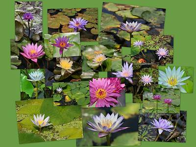 Photograph - Water Lilies Collage 3 by Allen Beatty