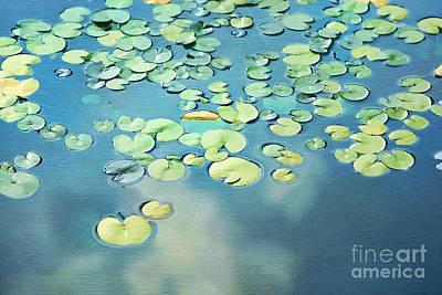 Water Lilies Art Print by Darren Fisher
