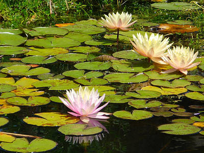 Photograph - Water Lilies by Dave Hall