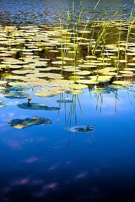 Photograph - Water Lilies by David Davies