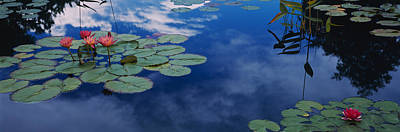 Water Lilies In A Pond, Denver Botanic Art Print by Panoramic Images