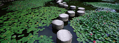 Water Lilies In A Pond, Helan Shrine Art Print by Panoramic Images