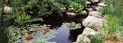 Water Lilies In A Pond, Sunken Garden Art Print