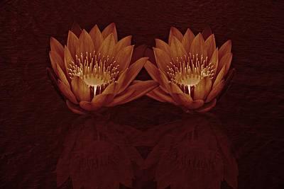 Water Lilies In Deep Sepia Art Print