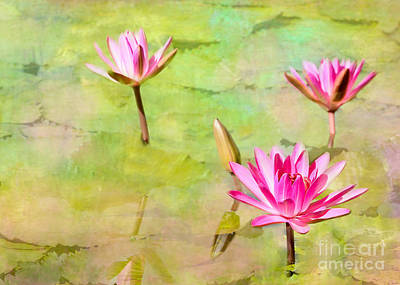 Photograph - Water Lilies Inspired By Monet by Sabrina L Ryan