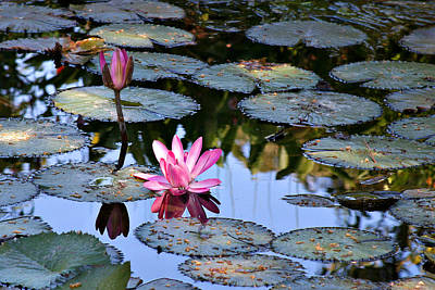 Photograph - Water Lilies by Matalyn Gardner