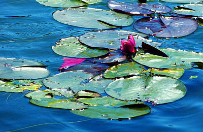 Photograph - Water Lilies by Monique Morin Matson