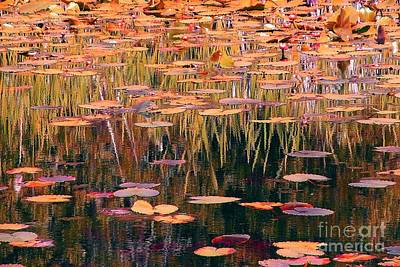 Photograph - Water Lilies Re Do by Chris Anderson