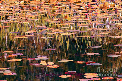 Photograph - Water Lilies Revisited by Chris Anderson
