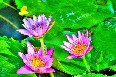 Photograph - Water Lilies by Richard Zentner
