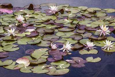 Digital Art - Water Lilies by Photographic Art by Russel Ray Photos