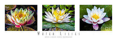 Photograph - Water Lilies Triptych With Title And Nameplate by David Doucot