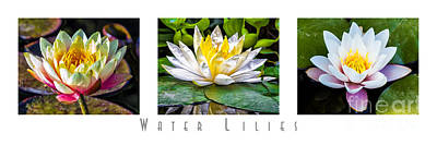 Photograph - Water Lilies Triptych With Title by David Doucot