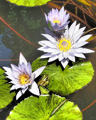 Aquatic Photograph - Water Lilies With Peeking Frog by Donna Haggerty