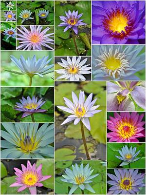 Photograph - Water Lilies Collage by Allen Beatty