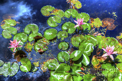 Photograph - Water Lillies by Dale Powell
