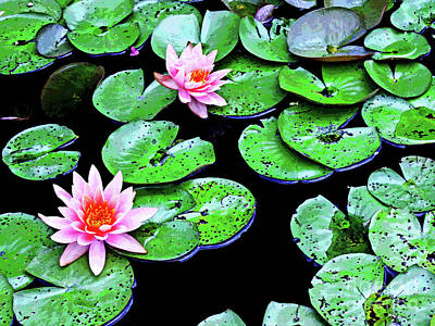 Water Lillies -- Inspired By Monet-1 Art Print by Larry Oskin