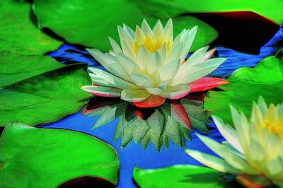 Print featuring the photograph Water Lilly by Ed Roberts