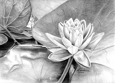 Lilly Pond Drawing - Water Lilly by Laurianna Taylor