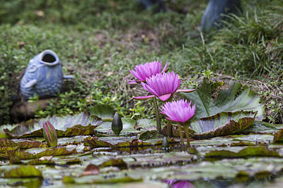 Photograph - Water Lilly Trio by Charles Warren