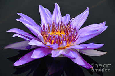 Water Lily - Aquarius Art Print