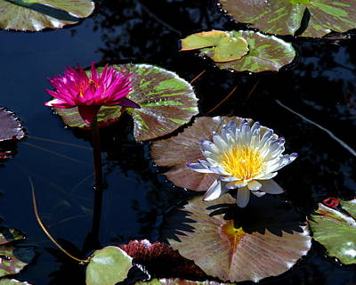 Photograph - Water Lily 009 by Larry Ward
