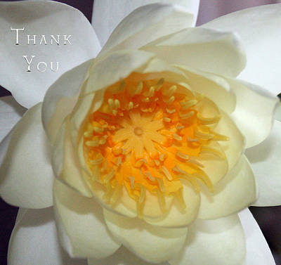 Lilies Photograph - Water Lily 2  And A Reminder To Utter The Words Thank You.  by Raenell Ochampaugh