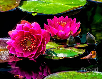 Photograph - Water Lily 2014-12 by Nick Zelinsky