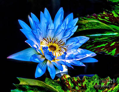 Photograph - Water Lily 2014-13 by Nick Zelinsky