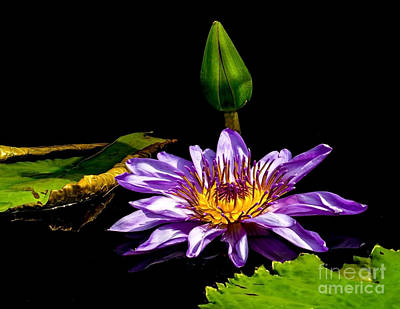 Photograph - Water Lily 2014-6 by Nick Zelinsky